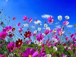 téléchargement.jpg fleur